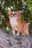 Cão em uma árvore imagens de stock