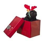 Cão em uma caixa de presente com antlers da rena Fotografia de Stock Royalty Free