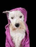 Cão em uma capa Imagem de Stock Royalty Free