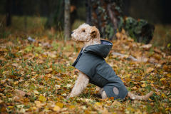 Cão em uma capa de chuva na floresta do outono fotos de stock