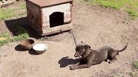 Cão em uma corrente, o cão ao lado da cabine, o cão na jarda Cão de protetor em uma corrente na vila filme