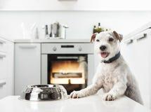 Cão em uma cozinha Fotos de Stock