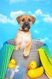 Cão em uma cuba da lavagem Imagens de Stock Royalty Free