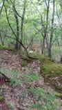 Cão em uma floresta Fotos de Stock