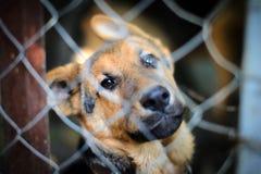 Cão em uma gaiola foto de stock