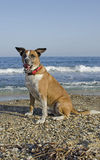 Cão em uma praia fotografia de stock royalty free