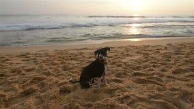 Cão em uma praia video estoque