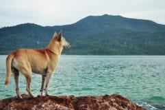 Cão em uma rocha Foto de Stock Royalty Free