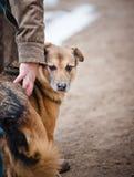 Cão em uma rua Fotografia de Stock