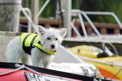 Cão em uma veste de vida na plataforma de barco Fotografia de Stock