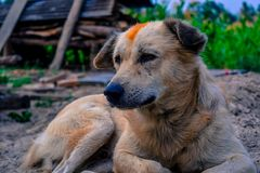 Cão emocional Um amigo fiel Foto de Stock