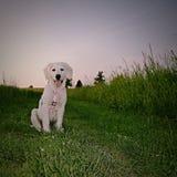 Cão encantador Fotografia de Stock Royalty Free
