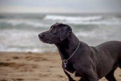Cão encantador imagens de stock