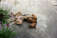 Cão engraçado Fotos de Stock Royalty Free