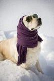 Cão engraçado Imagens de Stock Royalty Free