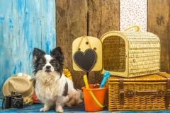 Cão engraçado com bagagem das férias de verão Foto de Stock Royalty Free