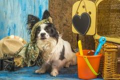 Cão engraçado das férias de verão Imagens de Stock