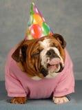 Cão engraçado do aniversário imagem de stock