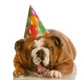 Cão engraçado do aniversário fotos de stock royalty free