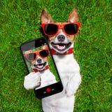 Cão engraçado do selfie fotografia de stock royalty free