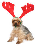 Cão engraçado dos alces Imagem de Stock Royalty Free