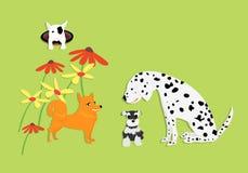 Cão engraçado e bonito com a flor no verde Fotografia de Stock