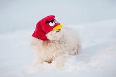 Cão engraçado na máscara irritada do pássaro Imagem de Stock Royalty Free