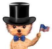 Cão engraçado que guarda a bandeira dos EUA Conceito de 4o julho Foto de Stock Royalty Free