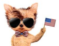 Cão engraçado que guarda a bandeira dos EUA Conceito de 4o julho Fotos de Stock Royalty Free