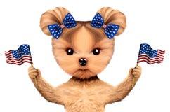 Cão engraçado que guarda bandeiras dos EUA Conceito de 4o julho Imagem de Stock Royalty Free