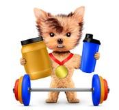 Cão engraçado que guarda a nutrição e o barbell do esporte Foto de Stock Royalty Free