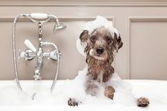 Cão engraçado que toma o banho de espuma
