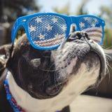 Cão engraçado que veste óculos de sol da bandeira americana Imagens de Stock Royalty Free
