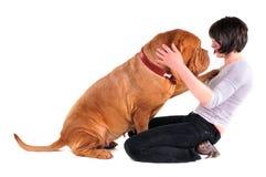 Cão enorme que joga com seu mestre Fotografia de Stock