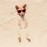 Cão enterrado na areia foto de stock