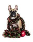 Cão envolvido acima no ouropel do feriado Imagens de Stock Royalty Free