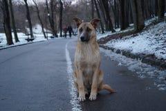 Cão esperto Fotografia de Stock Royalty Free