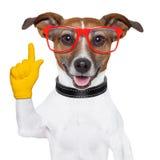 Cão esperto da escola imagens de stock