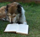 Cão esperto que lê um livro fotografia de stock