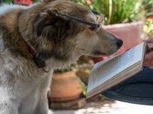 Cão esperto que lê um livro Imagem de Stock Royalty Free