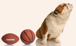 Cão estragado imagens de stock royalty free