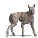 Cão estrangeiro curioso com pele e chifre do rinoceronte Fotografia de Stock Royalty Free