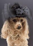 Cão extravagante Imagem de Stock