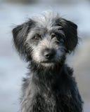 Cão fêmea novo Fotografia de Stock