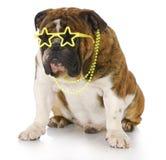Cão famoso Imagens de Stock