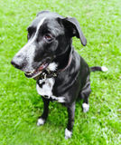 Cão feliz Foto de Stock