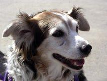 Cão feliz imagem de stock