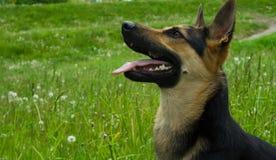 Cão feliz fotografia de stock royalty free