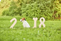 Cão feliz adorável do terrier de raposa no greetin do ano novo do parque 2018 Imagem de Stock