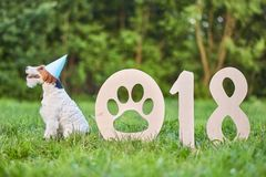 Cão feliz adorável do terrier de raposa no greetin do ano novo do parque 2018 Imagem de Stock Royalty Free